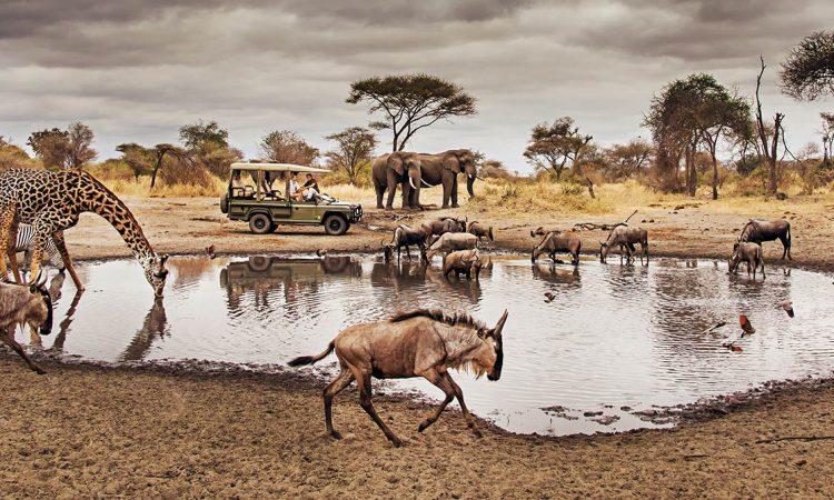 Game Drive north of Serengeti National Park