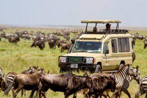 Serengeti tours