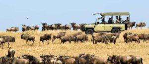 4 Days Serengeti Wildlife safari