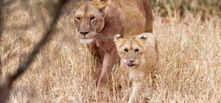 5 Days Serengeti National Park tour (Ndutu and Seronera safari)
