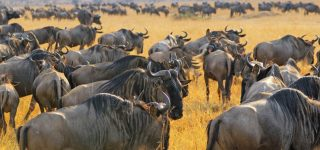8 Days Tanzania Wildebeest Migration Safari