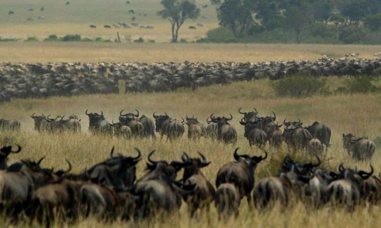 Top 5 attractions in Tanzania