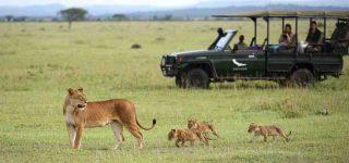 Serengeti National Park the Best National Park