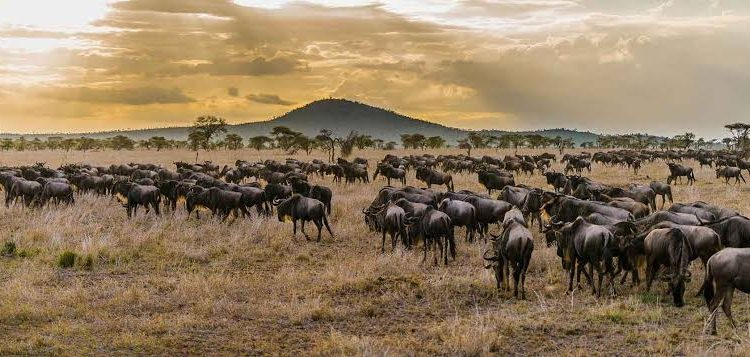 What is special about Serengeti National Park?