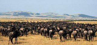 Serengeti as a UNESCO world heritage site