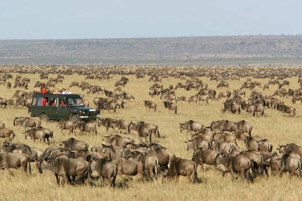 serengeti experience