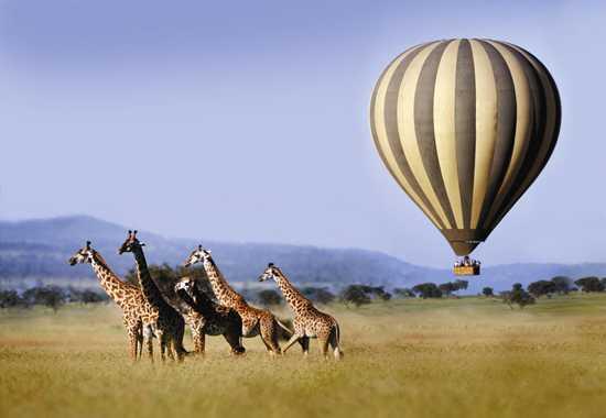 Safari guide in Serengeti national park