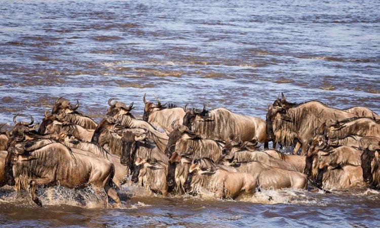 central part of Serengeti national park
