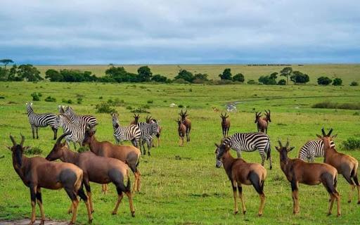 Serengeti national park 2021