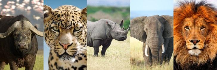 Tanzania Unforgettable Safari