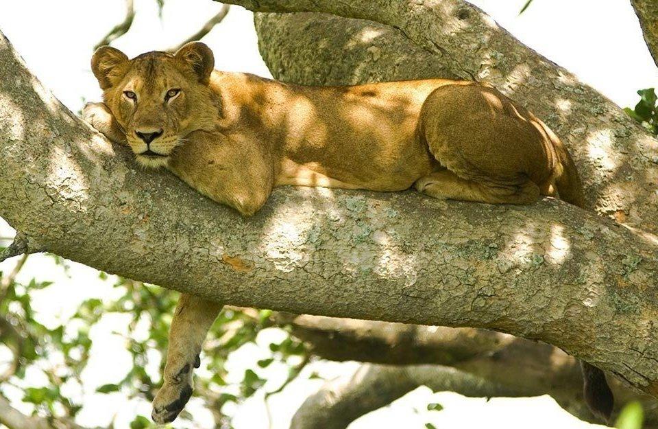 30 days Uganda, Tanzania, Kenya and DRCongo safari
