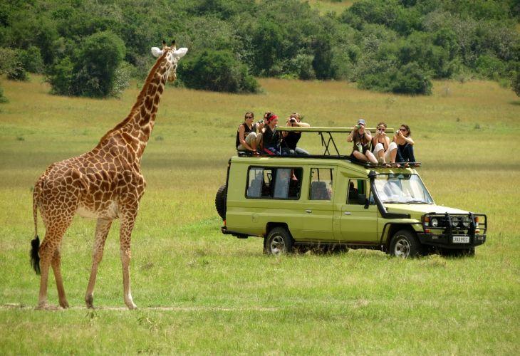 Serengeti Safaris Tours