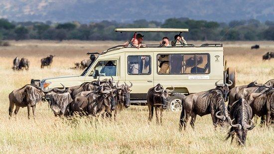 Serengeti safari and Zanzibar holidays