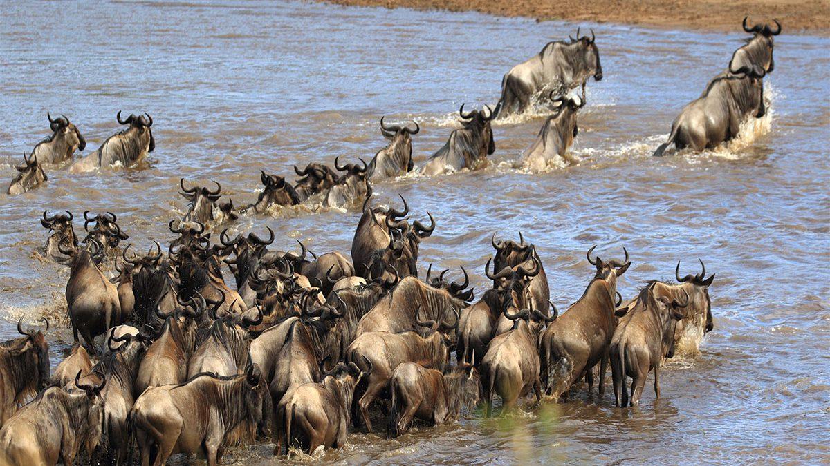 Serengeti safaris from June to October