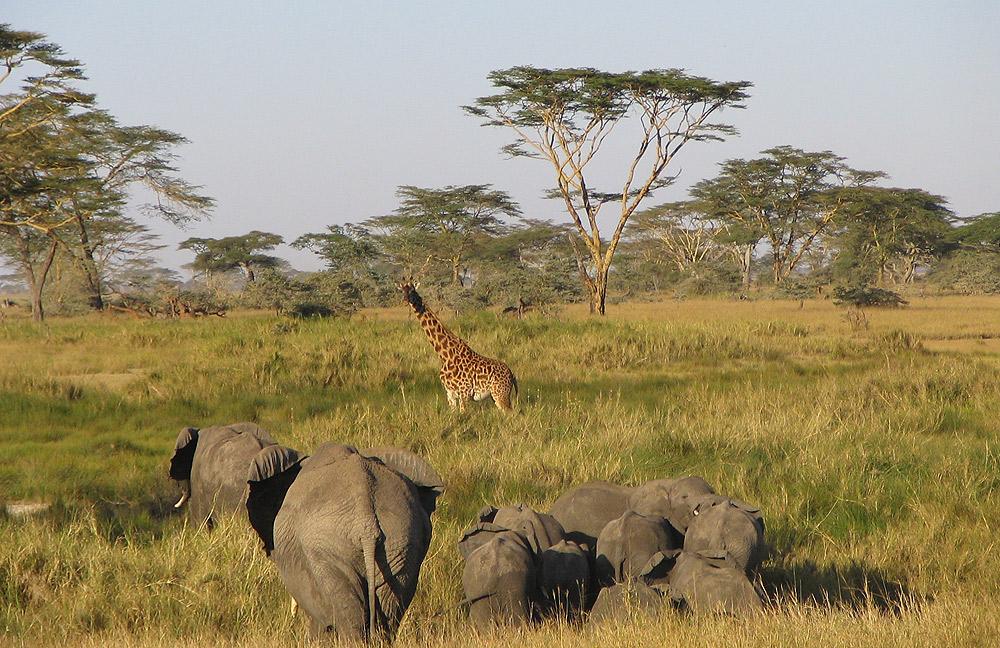 15 Days Tanzania Safari