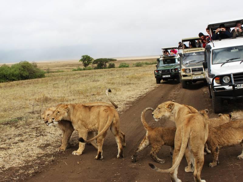 Serengeti National Park from Zanzibar